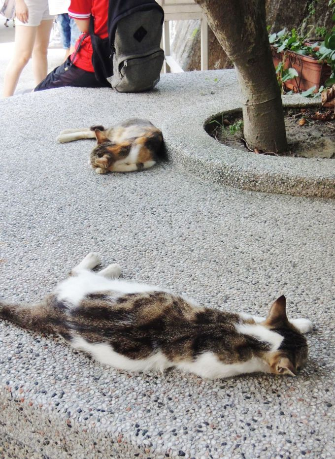 お店はあまりありません。猫たちとくつろぐ気持ちで!