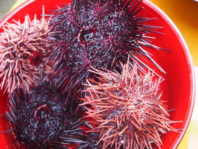 ウニの殻割り体験!島ならではの新鮮なお料理は最高!