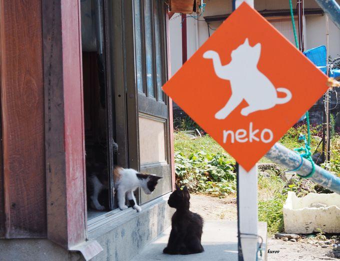 オレンジ色の「猫スポット」のかわいい看板をさがせ!
