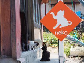 猫島が熊本にも!猫好き必見、天草「湯島」の魅力|熊本県|トラベルjp<たびねす>