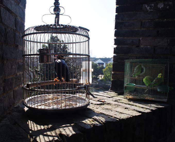 見逃さないで!「呉門橋」など中国らしい風景