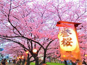 川越のお勧めお花見スポットはココ!小江戸の桜景色5選