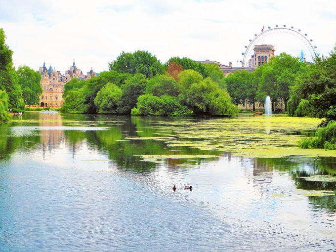 バッキンガム宮殿に隣接する「セント・ジェームズ・パーク」