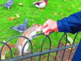 ロンドン観光の静かなる穴場!ロンドン中心地の王立公園4選