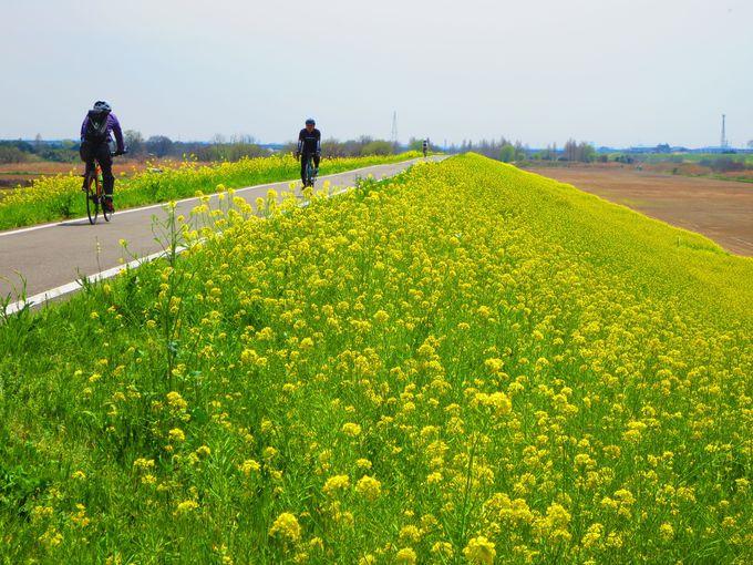 埼玉・川越狭山自転車道、桜&菜の花の絶景お花見スポットはママチャリでも大満喫!