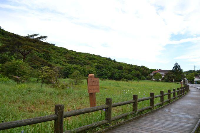 森林浴気分で歩ける湿原