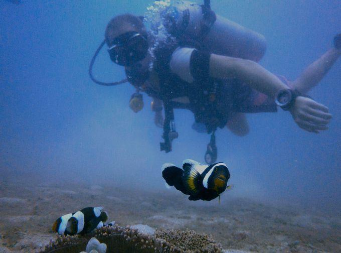 ダイビングの聖地「タオ島」