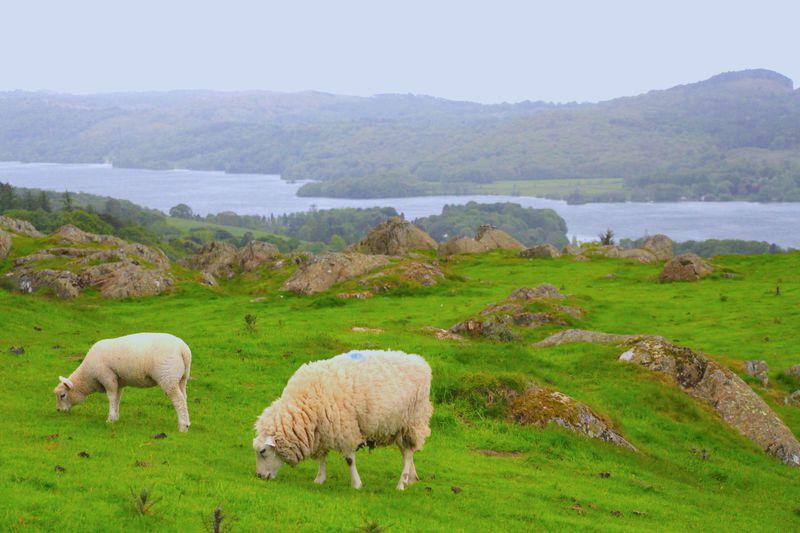 イギリス湖水地方ボウネスで大自然を満喫!ガイドブックに載っているような絶景を見に行こう
