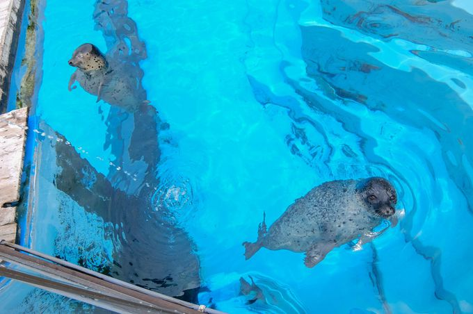 西日本最大クラスの水族館「マリンワールド海の中道」