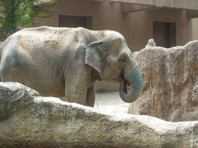 博多からすぐ♪一日中楽しめる福岡市動植物園を満喫しよう!