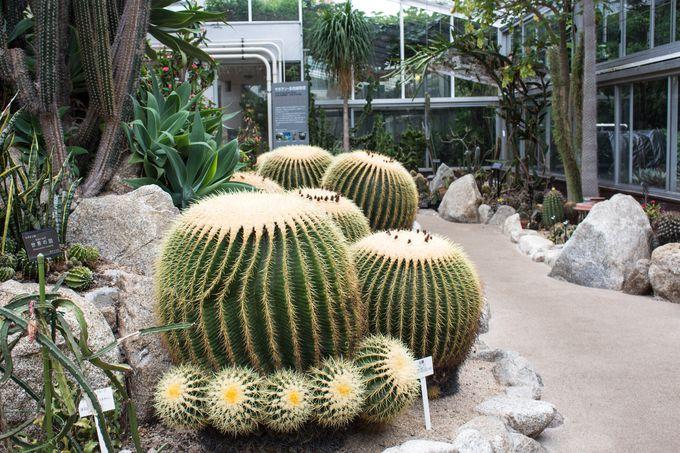 大人から子どもまで楽しめる観光スポット「福岡市動植物園」