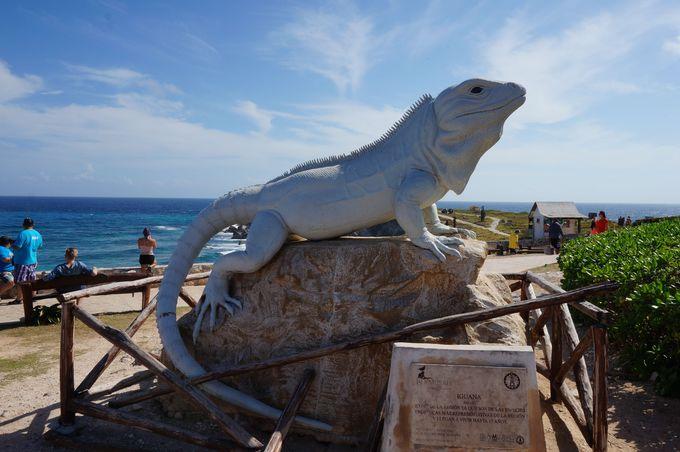 巨大なイグアナにも会える?!イグアナが沢山生息する岬。