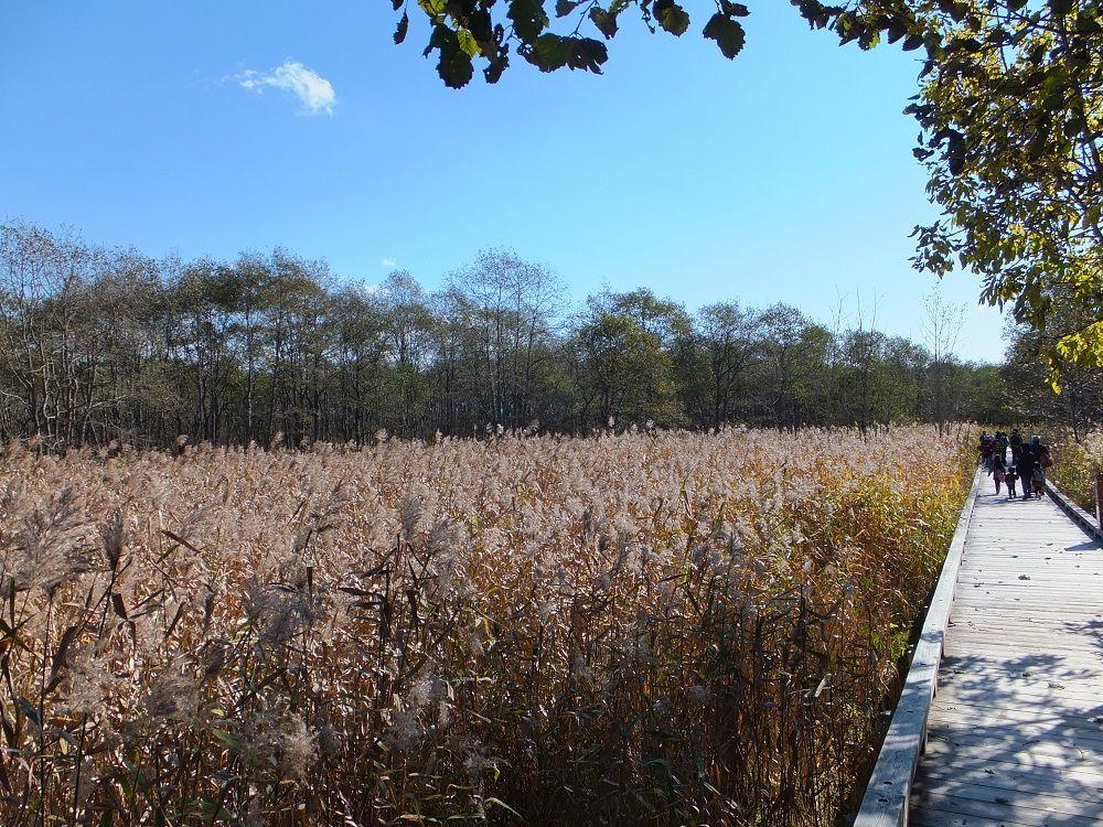 温根内木道で間近に湿原の自然観察