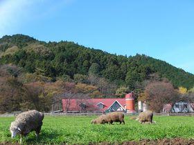 なぜかシマウマもいる!神奈川「服部牧場」で動物たちとふれあおう|神奈川県|トラベルjp<たびねす>
