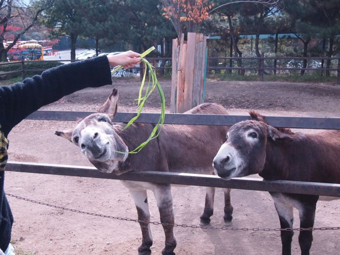 動物たちと肉薄!!関東最大級のサファリパーク「群馬サファリパーク」