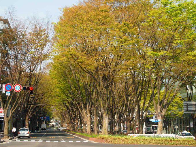 ケヤキ並木が光に包まれる「SENDAI光のページェント」