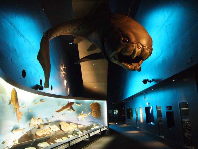 アーティスティックな展示空間の中に浮かびあがる「生きた化石」