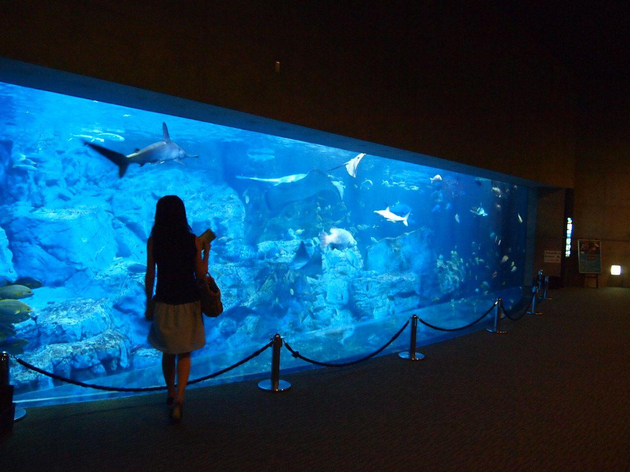 美術館を思わせるアートな水族館「うみたまご」