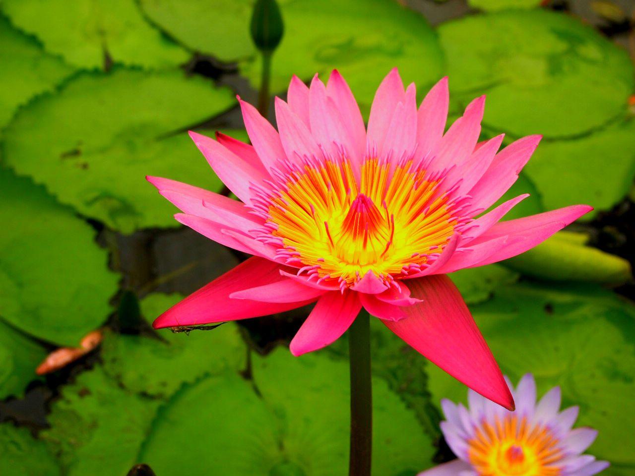 熱帯性の花々が美しい温室がおすすめ!