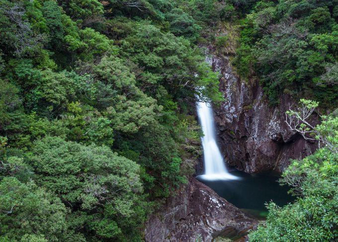 切り立った崖の間を流れ落ちる大迫力の「龍神の滝」