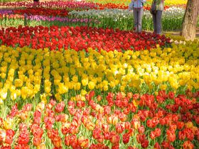 GWに見るべき!茨城県「国営ひたち海浜公園」のカラフルな花畑|茨城県|トラベルjp<たびねす>