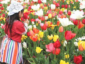 気分はオランダ娘!「国営越後丘陵公園」のチューリップ畑でHAPPY写真|新潟県|トラベルjp<たびねす>