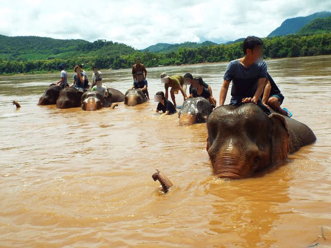 メコン川に入って象と一緒に水浴び!