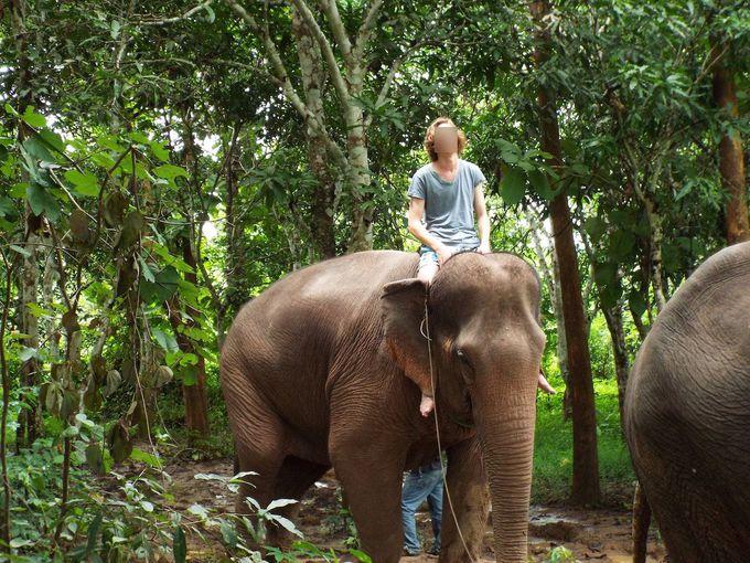 ここから実践へ。ひとりで象に乗ってみる!