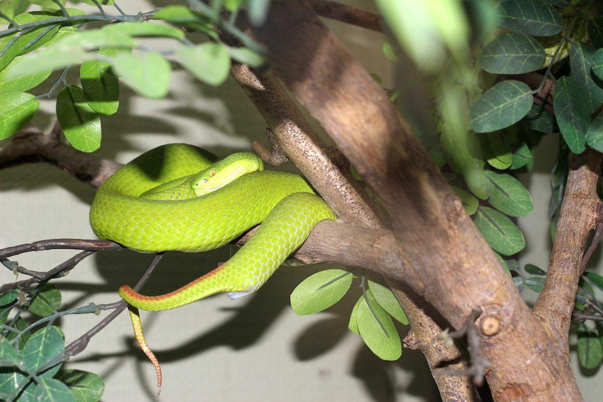 もともとは毒ヘビなどの研究施設