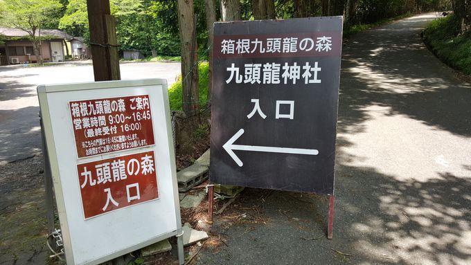 箱根九頭龍の森へ