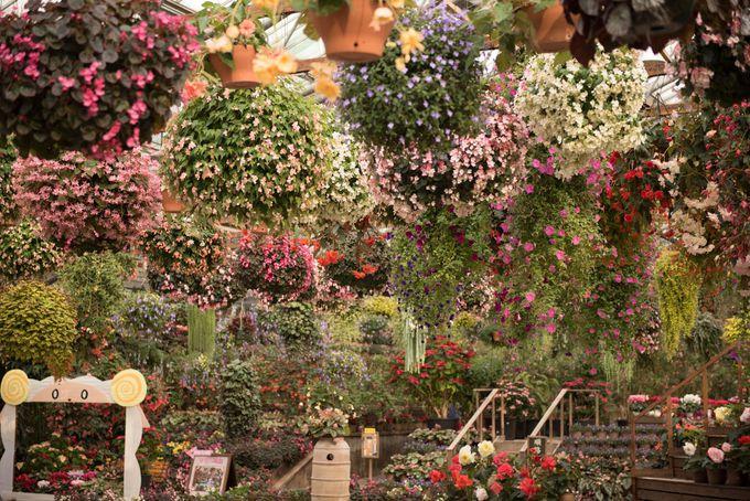入り口を開けると目の前に広がる南国の花々!