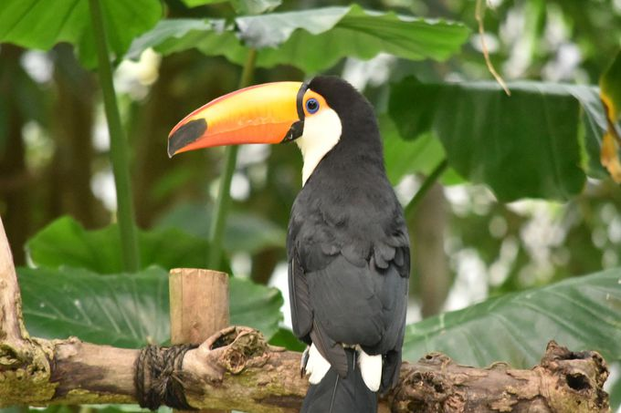 80種・800匹のたくさんの鳥たちと出会える!
