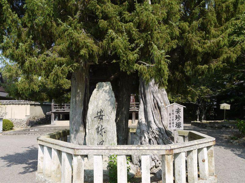 慈悲とおもてなしの心!蛇となった清姫の伝説が残る和歌山県最古の寺・道成寺