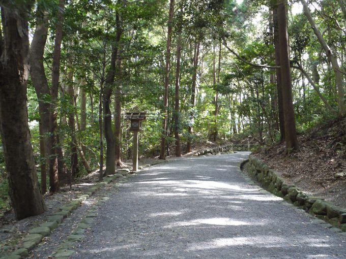 静かな「鎮守の森」を歩いて楽しもう!