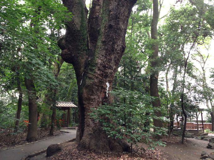 疲れたビジネスマンも癒す、森に佇む大きな木