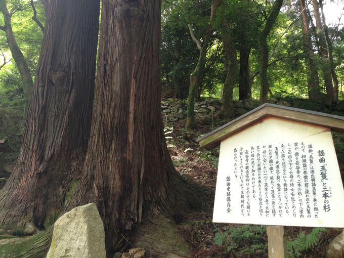 「源氏物語」にも登場する二本の杉