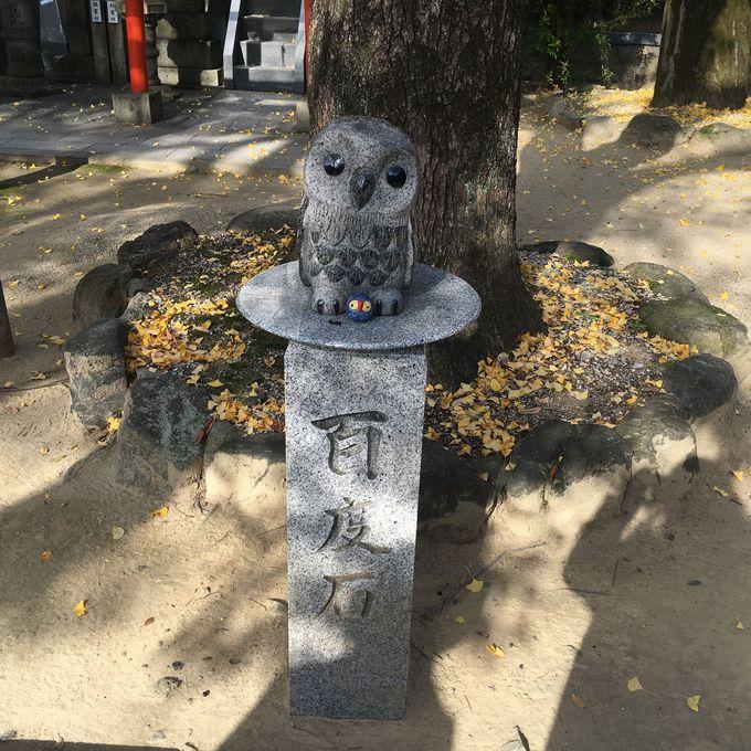 お百度参りをそっと見守る愛らしいフクロウ