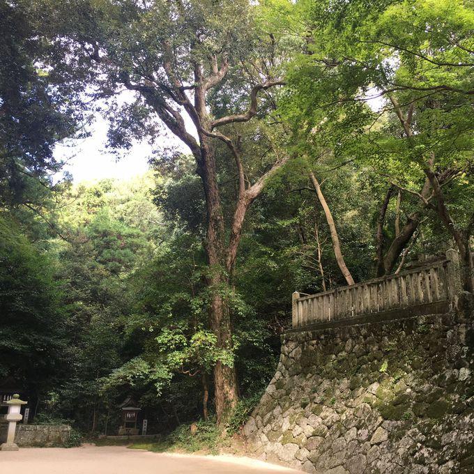 本殿の前で大きな木が語りかけるもの