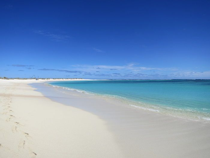 オーストラリア最大級の珊瑚礁「ニンガルー リーフ」