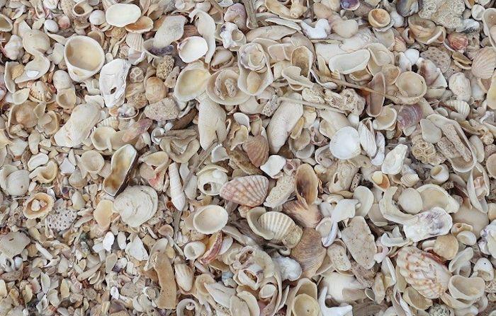 貝殻でできたビーチ「ヒアーソンズ・コーブ」