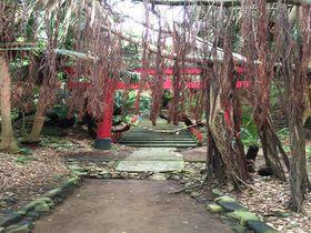 縁結びのパワースポット。九州最南端・佐多岬「御崎神社」|鹿児島県|トラベルjp<たびねす>