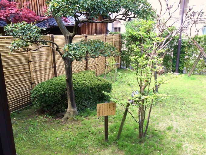 表庭の「百日紅」、「夾竹桃」、「沙羅の木」