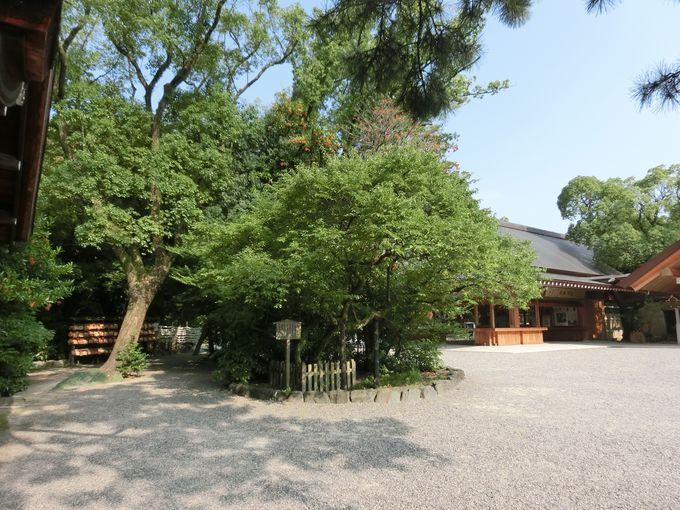 実がならない「ならずの梅」と徳川綱吉の再建「西楽所」