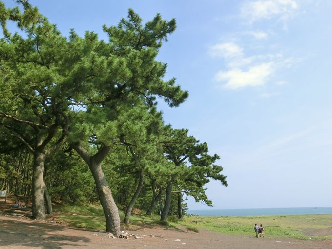 羽衣伝説で知られる静岡の名勝「三保の松原」