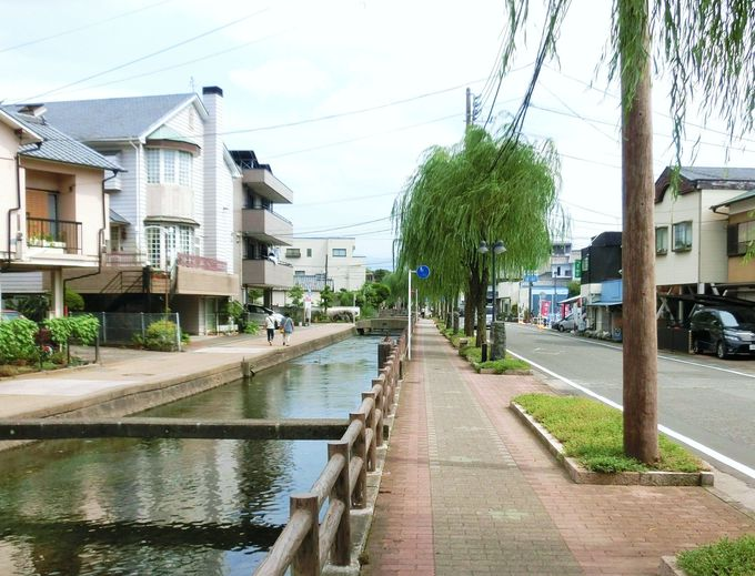 文学碑に彩りを添える「桜川」と「柳の木」