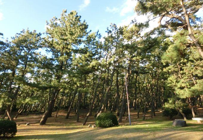 潮騒の聞こえる「千本松原」で森林浴