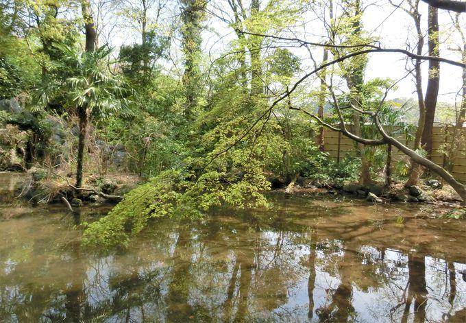 1300年以上の歴史を持つ名水の地・「亀の池」と「神水苑」
