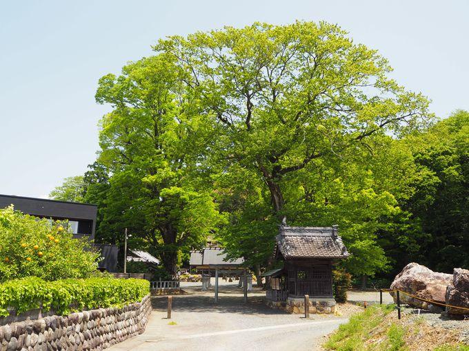 「濱名惣社神明宮」へのアクセスと創建