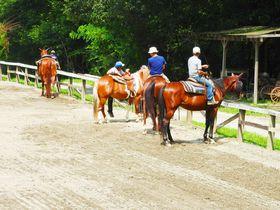 山梨・小淵沢ICから至近!乗馬クラブ「ホワイトサドル」で乗馬体験