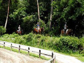 山梨・小淵沢ICから至近!乗馬クラブ「ホワイトサドル」で場外騎乗体験|山梨県|トラベルjp<たびねす>